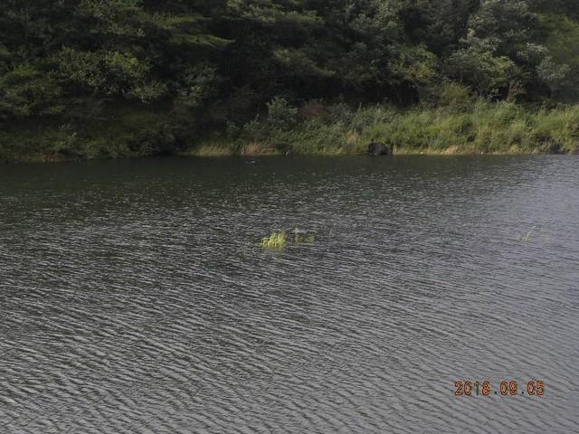 180905-2台風明湖畔荘前小島隠れる